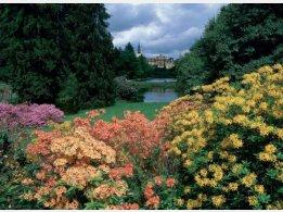 Průhonický rozkvetlý park
