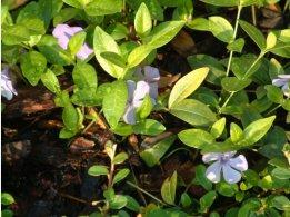 Květiny na zahrádce Parkhotelu Průhonice
