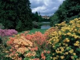 Rozkvetlý park Průhonice